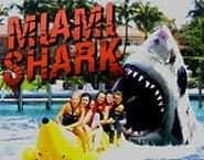 Rekin z Miami